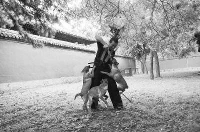 北京故宫安保狗疯子常福茂(图)
