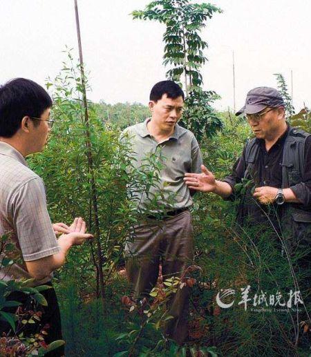 """林業專家正在講解種檀香需要種伴生樹的""""秘密"""""""