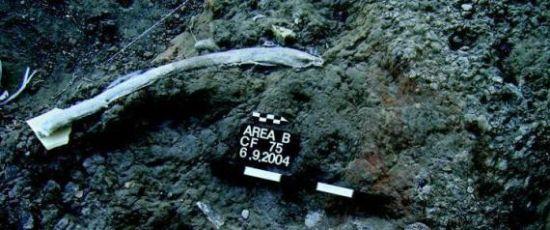 考古学家在动物遗骸中发现距今约50万年的石器