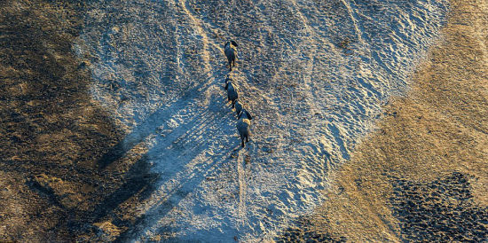 澳摄影师百米高空拍象群沙漠唯美投影2
