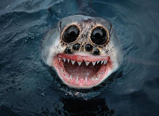 蜘蛛与鲨鱼的结合想想都令人毛骨悚然。