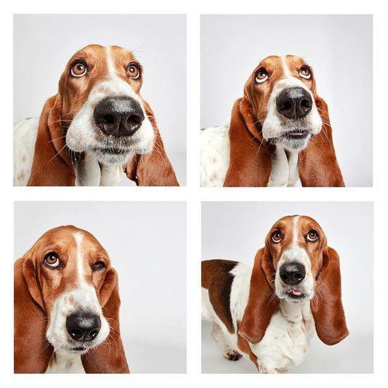 创意十足的小狗拍搞怪照片