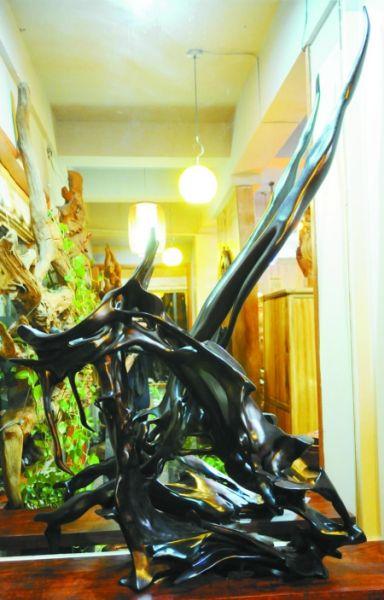 何先生将挖掘来的红豆杉阴沉木加工成根艺作品,陈列在自己位于鼓楼的店里。
