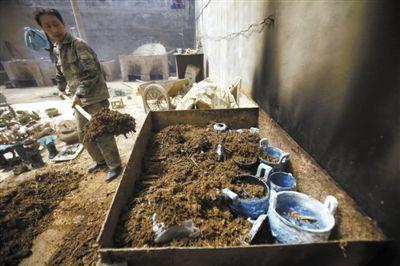 3月31日,工人将青铜器埋进土里作旧