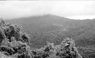 海南岛西部的昌江县有座霸王岭,属国家重点自然保护区,而且这里还生长着野生海南黄花梨