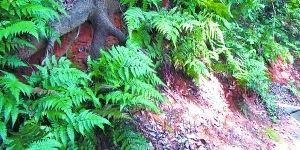 """人为""""盗土""""加剧了遗址回填封土堆剥蚀,导致一些大树根系裸露。"""