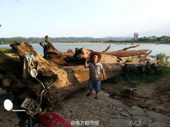 剛打撈上岸的木頭被放置在東江邊上。從江底撈出的這40多根木頭被初步鑑定為烏木,價值幾何仍未知。受訪者供圖
