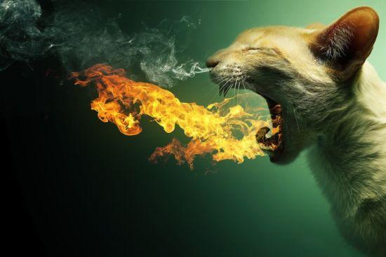 观念摄影:动物要变异