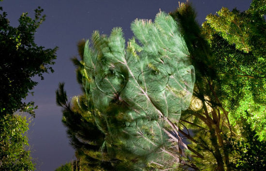 澳摄影师树木上投射名人肖像拍个性照1